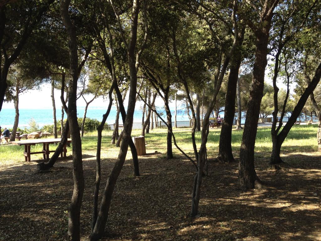 Petite pause pour manger un bout à l'ombre des pins